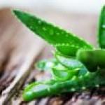 Aloe vera: benefici e come usarla