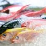Pesce azzurro nella dieta: proprietà e controindicazioni