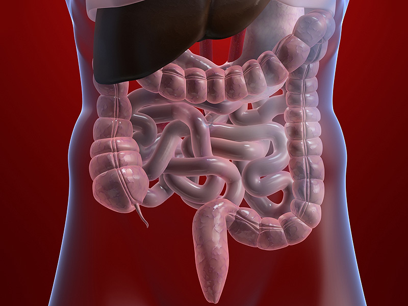 dt_150717_intestines_800x600